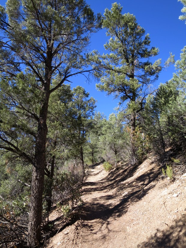 Gently graded switchbacks up to the saddle, Lovell Canyon Trail, Spring Mountains National Recreation Area, Humboldt-Toynbee National Forest, Nevada