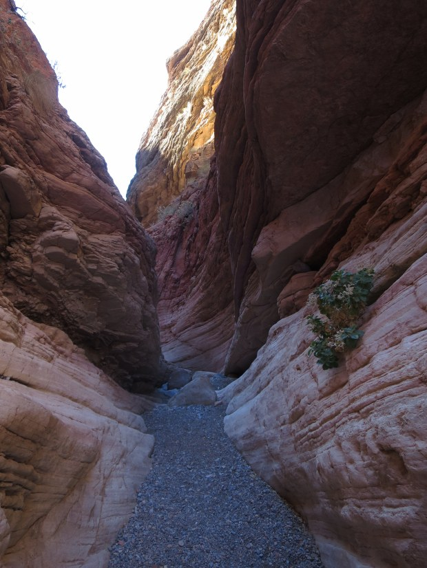 Anniversary Narrows, Muddy Mountains Wilderness, Nevada
