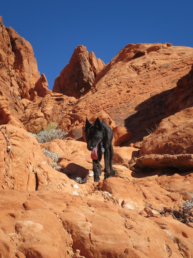 The Abbadog in Valley of Fire State Park, Nevada
