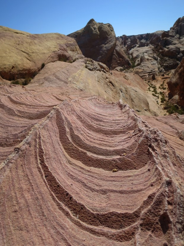 Exposed colors atop a rock fin on White Domes Loop Trail, Valley of Fire State Park, Nevada