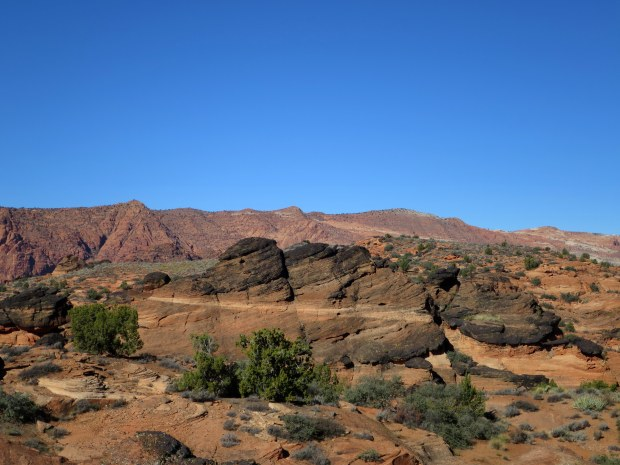 Red Cliffs Desert Preserve, Utah