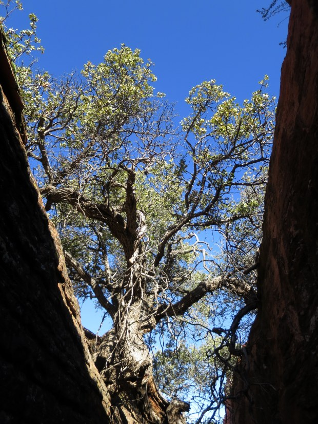 Looking up while walking in the rock joint, Snow Canyon State Park, Utah