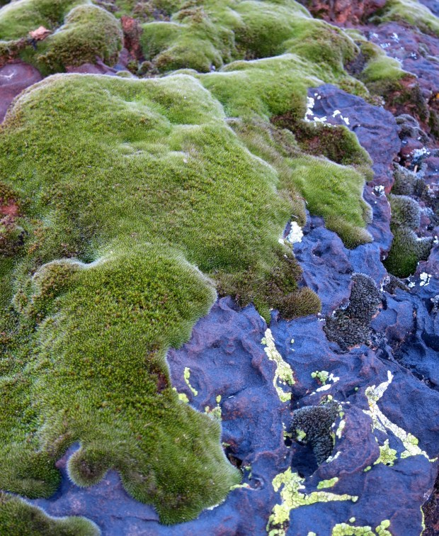 Green moss on black volcanic rock, Snow Canyon State Park, Utah