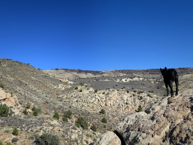 Abby surveying, Red Cliffs Desert Reserve, Utah