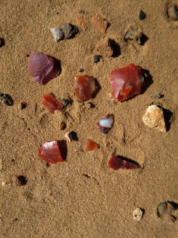 Chert scattered about, Red Cliffs Desert Reserve, Utah