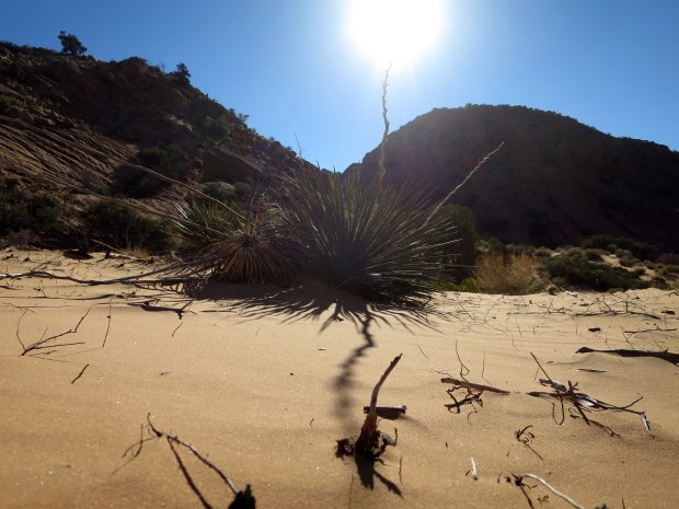 Yucca and shadow patterns in the sandy wash, Red Cliffs Desert Reserve, Utah