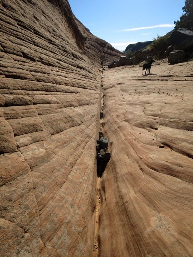 Alongside the Yellow Knolls Trail, Red Cliffs Desert Reserve, Utah
