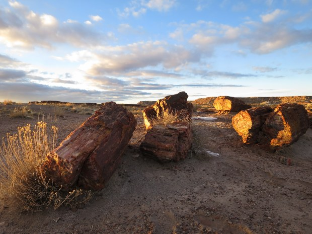 Giant Logs Trail, Petrified Forest National Park, Arizona