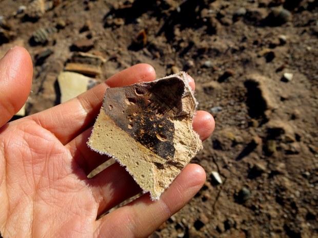Inspecting pottery sherds near Homol'ovi I, Homol'ovi State Park, Arizona