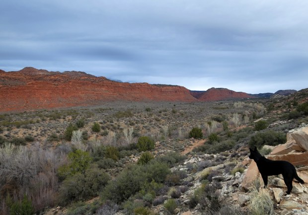 Abby standing on a white reef looking at the Red Cliffs, Red Cliffs National Conservation Area, Utah