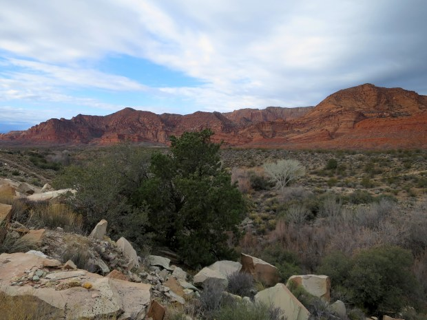 Another view of the cliffs from the reef, Red Cliffs National Conservation Area, Utah