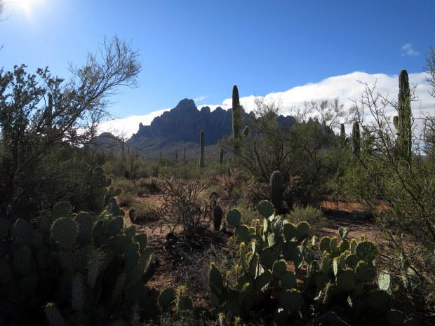 Silver Bell Mountains from Ironwood Forest National Monument, Arizona
