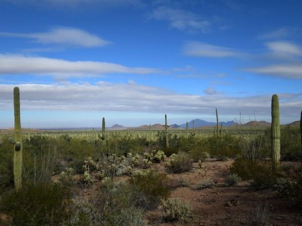 Ironwood Forest National Monument, Arizona