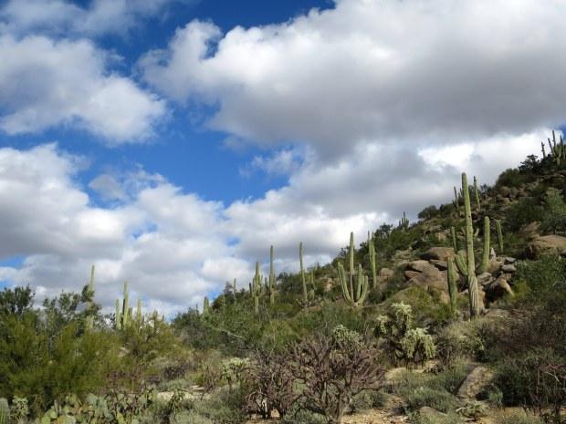 Tortolita Mountain Park, Arizona