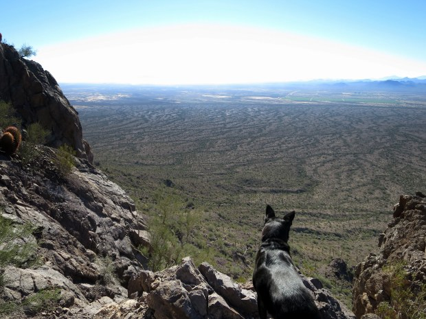 Abby looking out, Hunter Trail, Picacho Peak State Park, Arizona