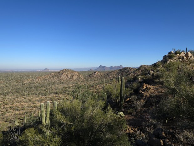 Valley View Overlook Trail, Saguaro National Park, Arizona