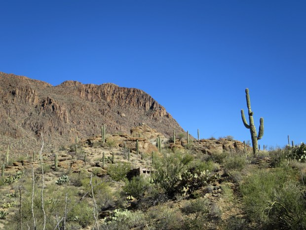 Tucson Mountain Park, Arizona