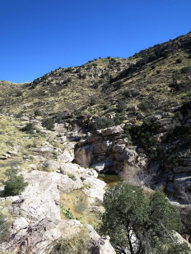 Molino Canyon, Coronado National Forest, Arizona