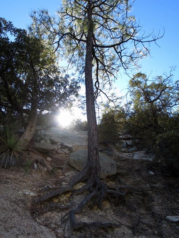 Climbing up, Coronado National Forest, Arizona