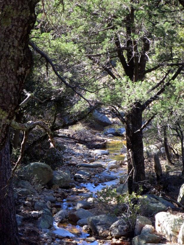 Bug Springs Trail, Coronado National Forest, Arizona