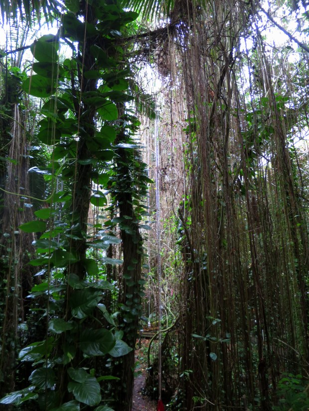 Inside rainforest biome, Biosphere 2, Arizona