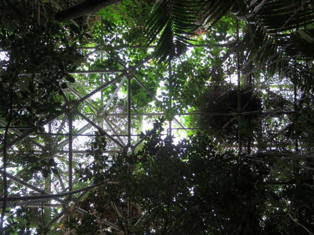 Inside the rainforest biome, Biosphere 2, Arizona