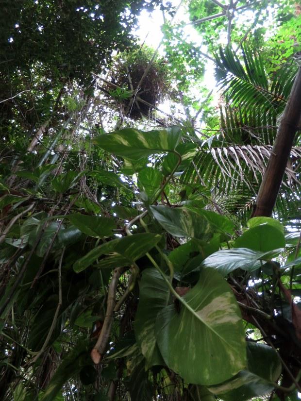 Rainforest biome, Biosphere 2, Arizona
