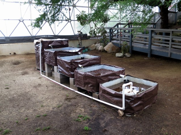 High school aquaponics experiement, Biosphere 2, Arizona