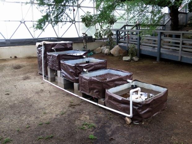 High school aquaponics experiement, Biosphere 2, Arizona