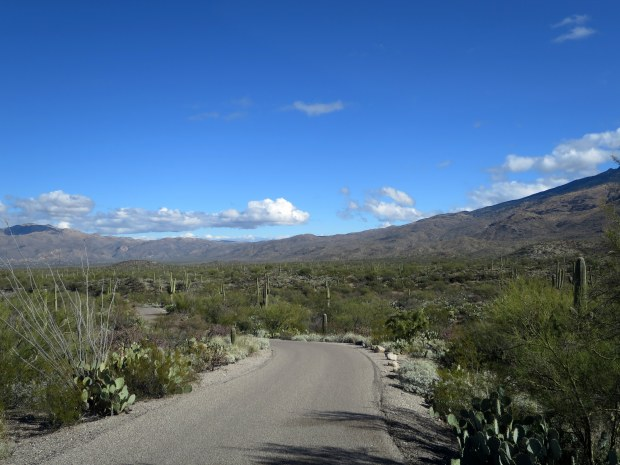Scenic drive, Saguaro National Park, Arizona