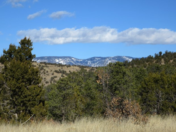 Views from a ridge, Lincoln National Forest, New Mexico