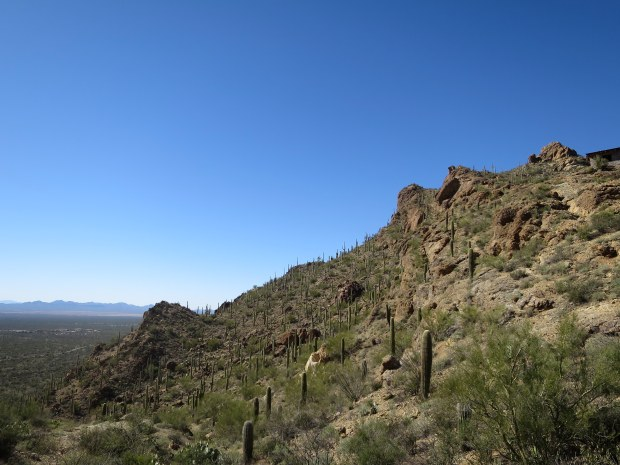 Tucson Mountain Park, Tucson, Arizona