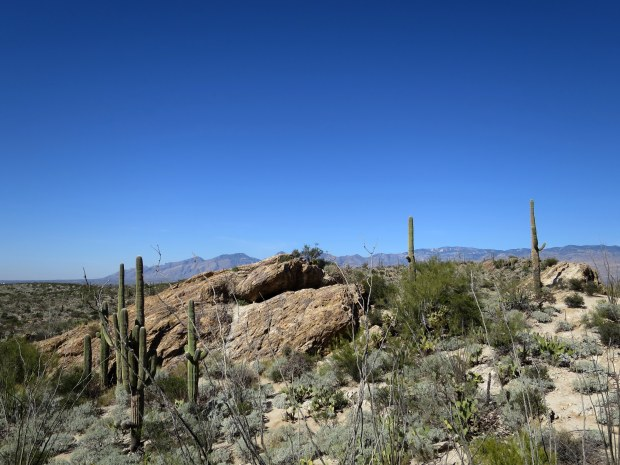 Javelina Rocks, Saguaro National Park, Tucson, Arizona