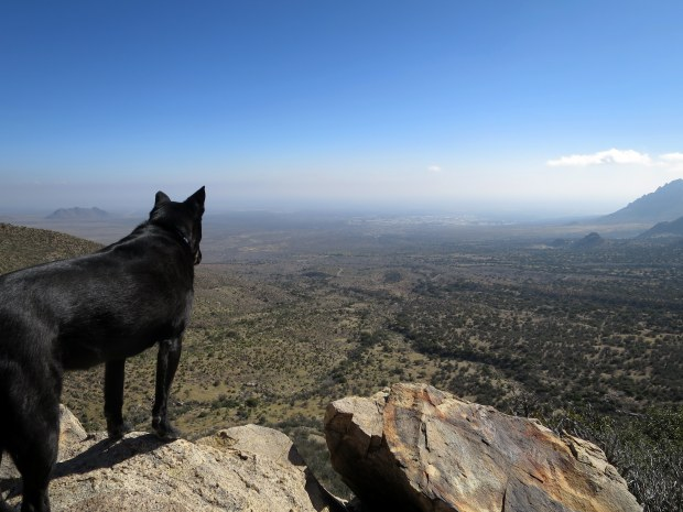 Abby surveying, Baylor Pass Trail, Organ Mountain-Desert Peaks National Monument, New Mexico