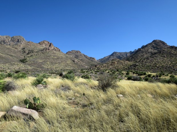 Back near the western trailhead, Baylor Pass Trail, Organ Mountain-Desert Peaks National Monument, New Mexico