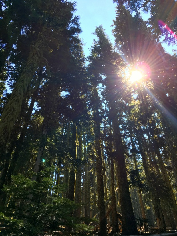 2016-09-08-oregon_redwoods_iphone-002