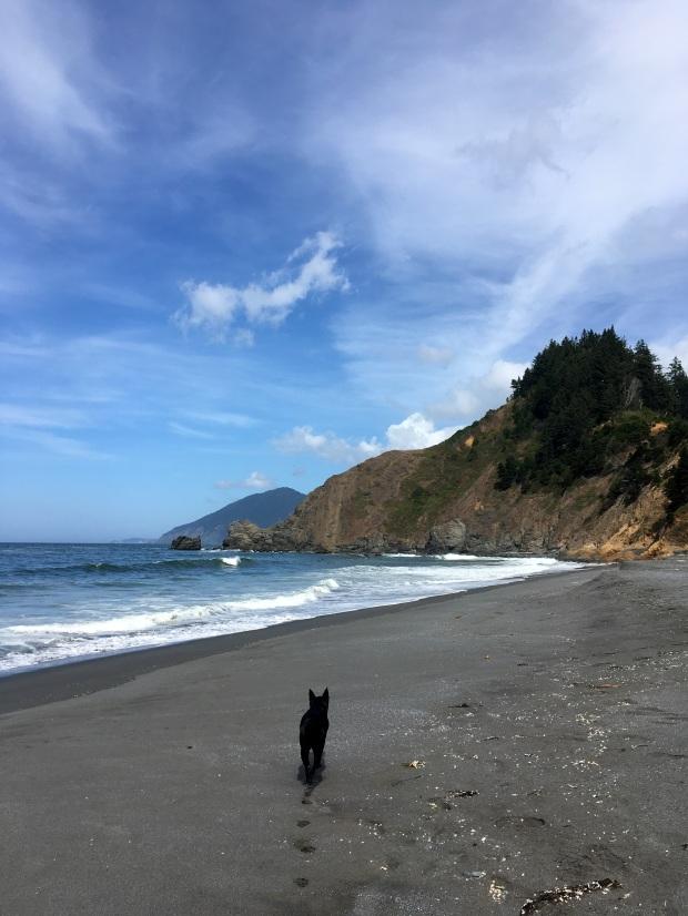 2016-09-08-oregon_redwoods_iphone-162