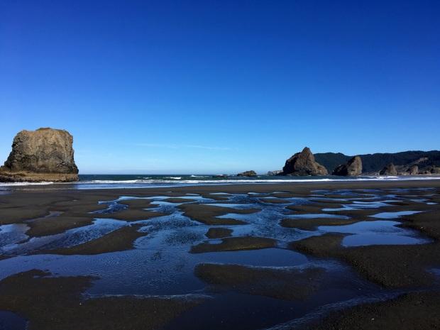 2016-09-08-oregon_redwoods_iphone-313