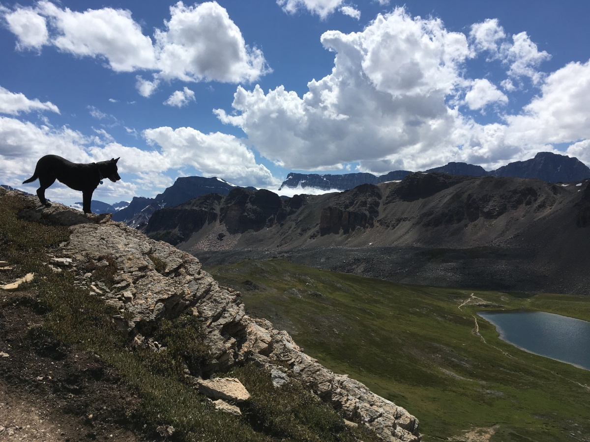Banff National Park, Part 2: Parker Ridge and Helen Lake/Dolomite Pass Trails