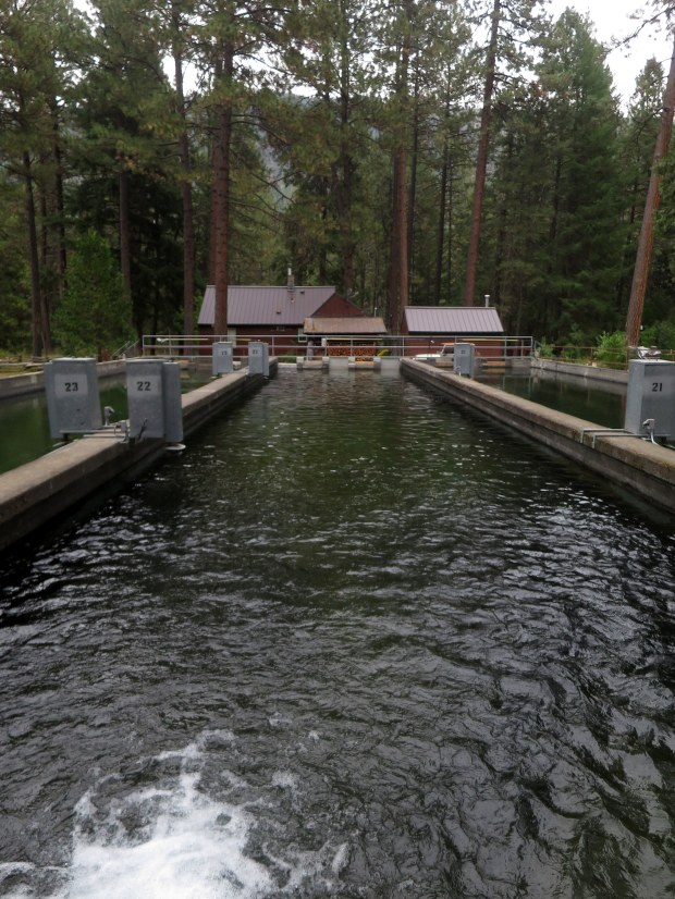 A couple relaxing days in deschutes national forest for Suttle fish farm