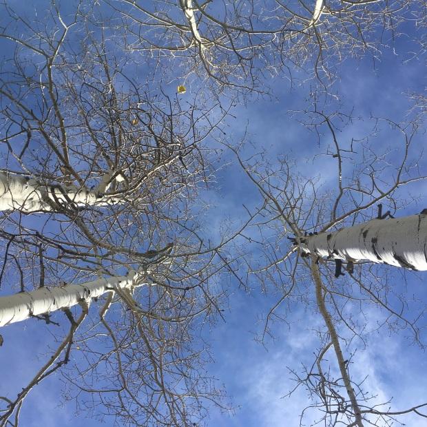 durango_woodsranch_iphone-442
