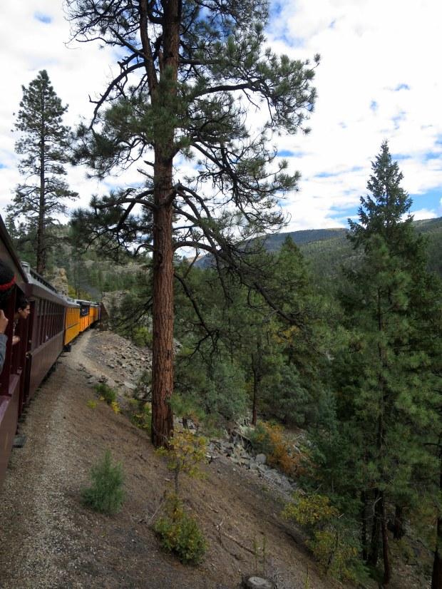 Ponderosa pine country