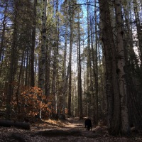 On Solitude and Walking in the Woods