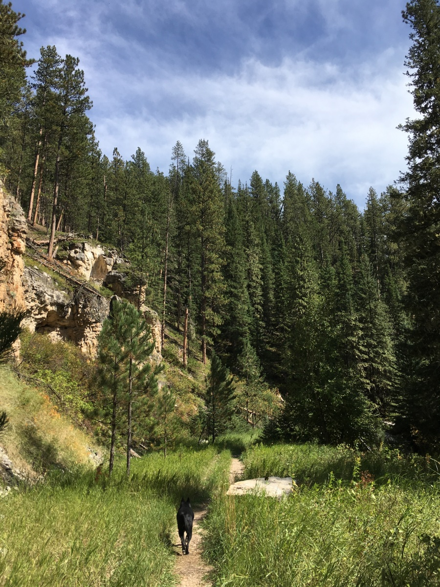 Big Trees: Iron Creek Trail and Spearfish Canyon