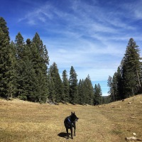 The Solitude Sundays Series: Abby and I Take on the Sacramento Mountains